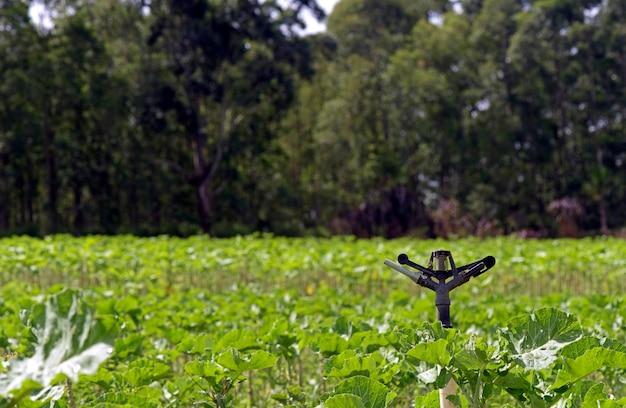 Attrezzatura per l'irrigazione nella piantagione di cavoli
