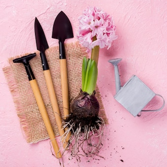 Attrezzi per fiori e radice di giacinto