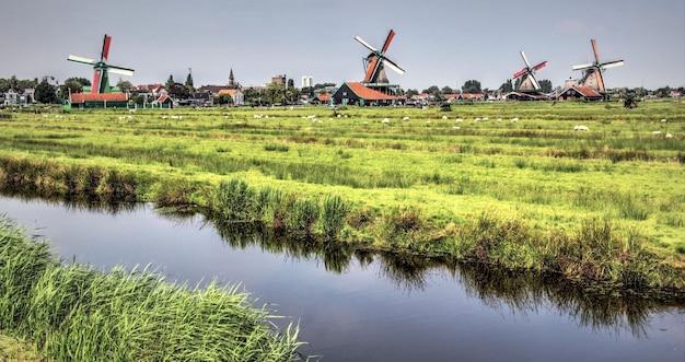 Autentico paesaggio olandese in una bella giornata