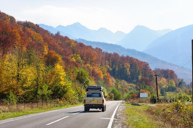 Auto nella foresta in transfagarasan road