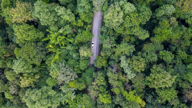 Automobile aerea di vista superiore che guida attraverso la foresta sulla strada campestre.