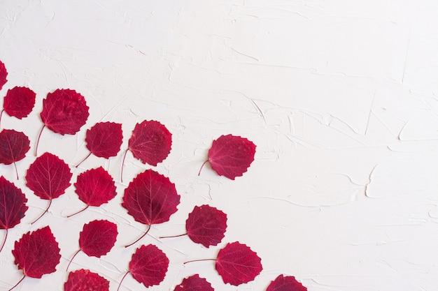 Autumn flat lay: foglie rosse su sfondo neutro pastello. vista dall'alto, copia dello spazio.