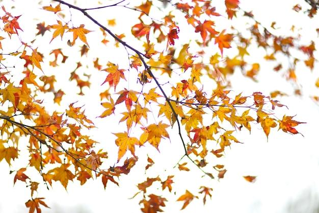 Autumn foliage, a kyoto in giappone l'ultima stagione autunnale