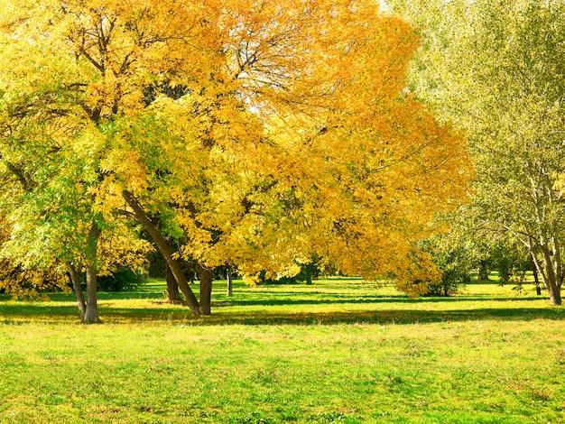 Autunno al cortile e giardino. sfondo di natura con alberi colorati a giornata di sole