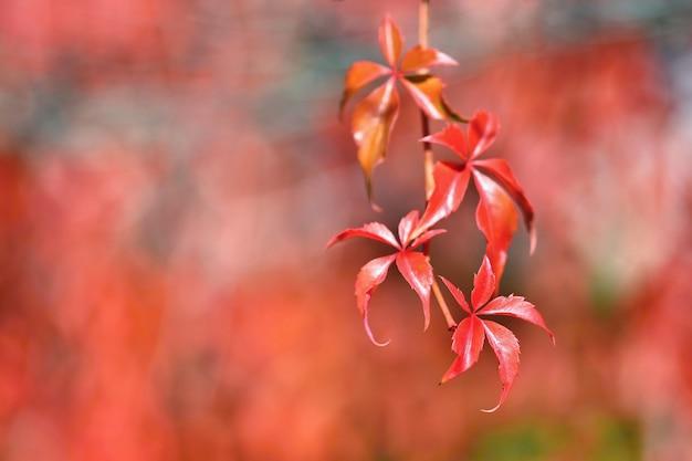 Autunno. belle foglie colorate sugli alberi nel tempo di autunno. sfondo naturale di colore stagionale.
