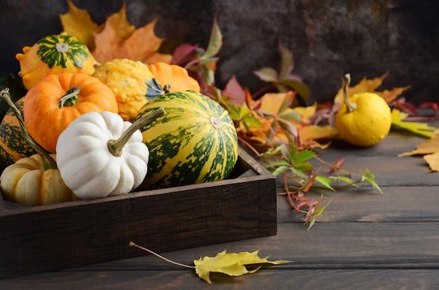 Autunno composizione del ringraziamento con assorted mini pumpkins in legno vassoio su un tavolo di legno