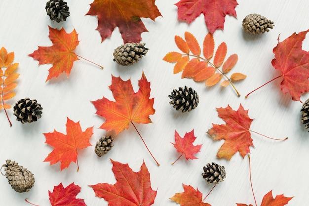 Autunno con acero rosso e foglie di sorbo e coni di abete sul tavolo bianco o altra superficie