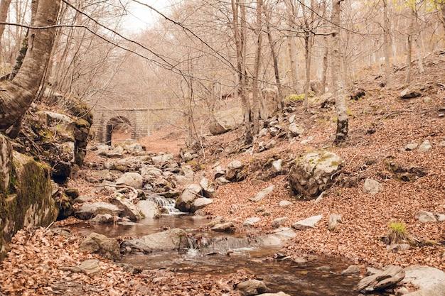 Autunno della foresta in santa fe del montseny con il ponte della roccia