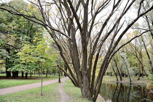 Autunno dorato in un parco di san pietroburgo