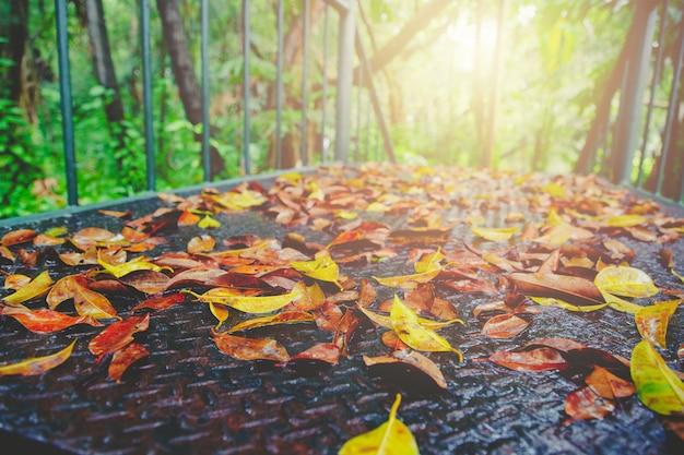 Autunno e foglia verde sulla vecchia via d'acciaio bagnato arrugginito passerella nel parco luce solare e chiarore