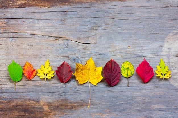 Autunno foglie colorate disposte in fila sullo sfondo di vecchie tavole incrinate, rovere sbiancato
