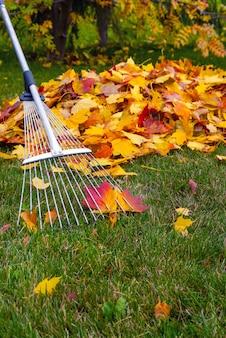 Autunno foglie gialle cadute di raccolta nel parco di autunno.