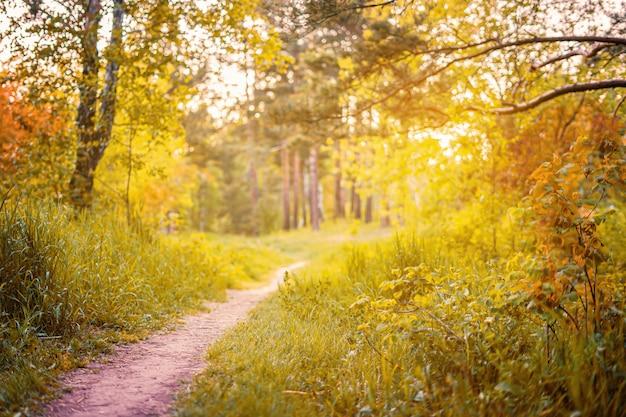 Autunno. foresta d'autunno. paesaggio forestale. natura autunnale. sole nella foresta. il sole splende attraverso gli alberi. percorso nel parco naturale con alberi di autunno.