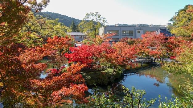 Autunno in giappone a caccia di foglie rosse dell'albero di acero kioto