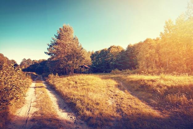 Autunno soleggiato d'oro dell'annata nella foresta e nel campo.