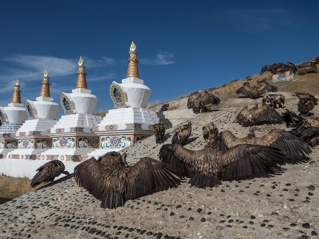 Avvoltoi in attesa del loro pasto in una cerimonia di sepoltura del cielo nel villaggio di yarchen gar, cina