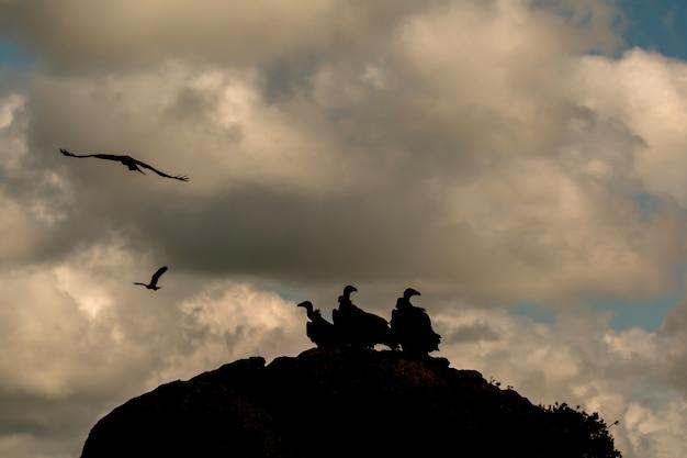 Avvoltoi su una grande roccia con il cielo nuvoloso