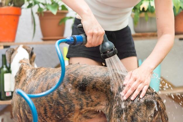 Azione di lavaggio del cane reale
