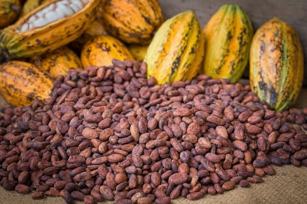 Baccello e fagioli maturi del cacao installati su fondo di legno rustico