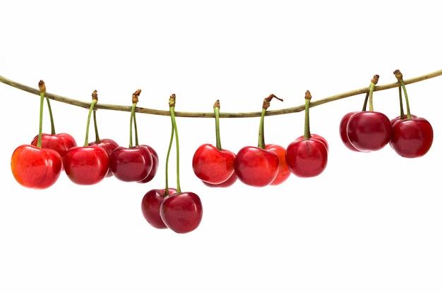 Bacche mature di ciliegie rosse su un ramo su bianco