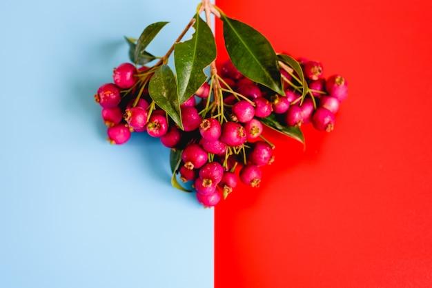 Bacche rosse sembranti deliziose isolate su una parete dello studio.