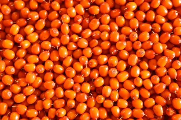 Bacche selvatiche mature del raccolto dell'olivello spinoso come parete