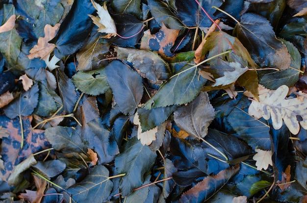 Bagnate foglie scure cadute