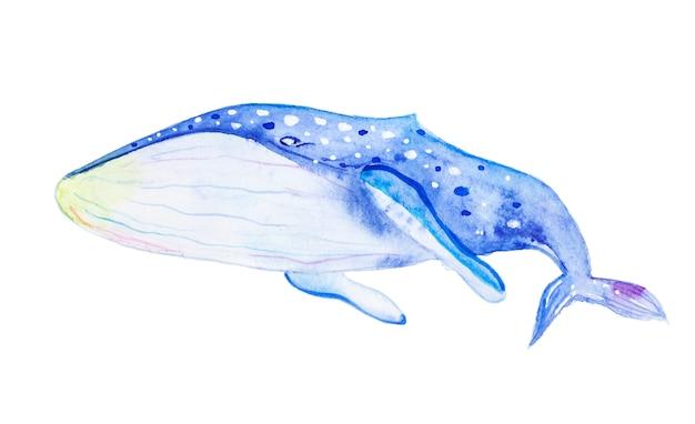 Balena blu dell'acquerello