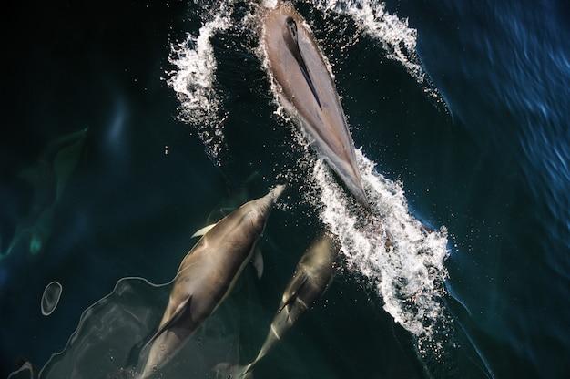 Balena e delfino che guardano in patagonia, argentina