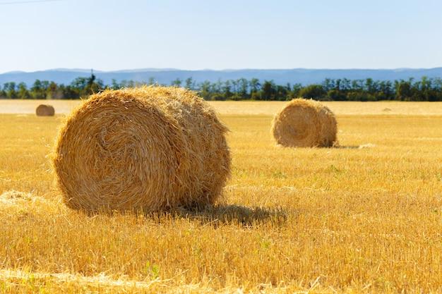 Balle di fieno dorate in campagna