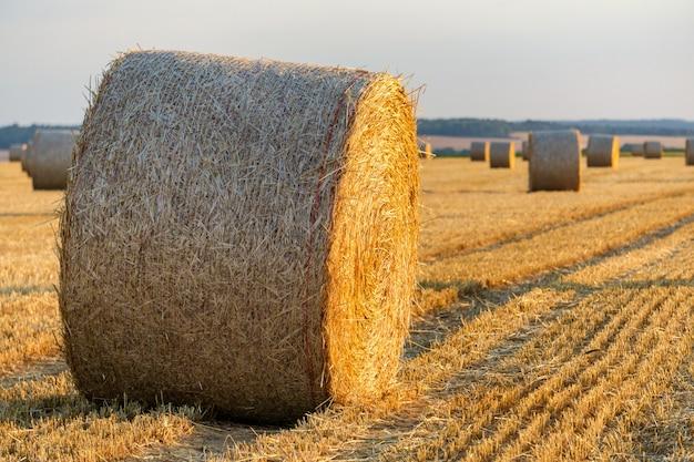 Balle di paglia impilate in un campo al momento del tramonto