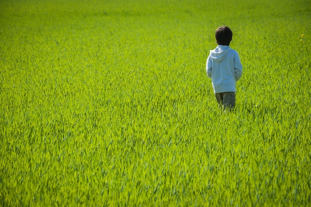 Bambino a piedi sul campo di erba verde gialla