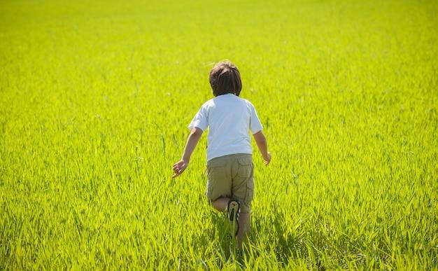 Bambino che ha tempo felice in natura sul prato