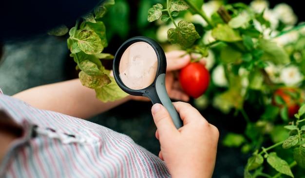 Bambino che usando magnifier guardando pomodoro