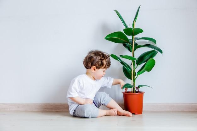 Bambino con la pianta verde che si siede su un pavimento vicino al muro bianco