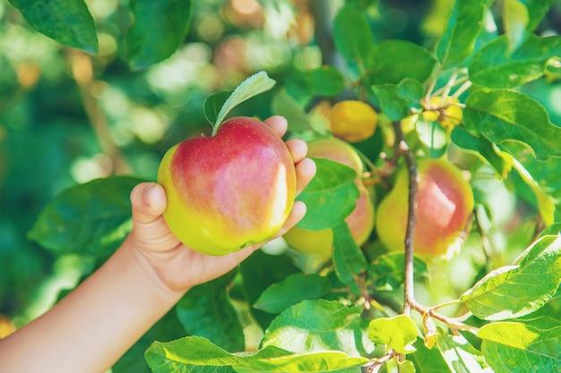Bambino con una mela in giardino