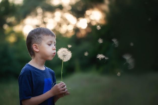 Bambino del ritratto all'aperto in natura che soffia un dente di leone alla sera soleggiata di estate.