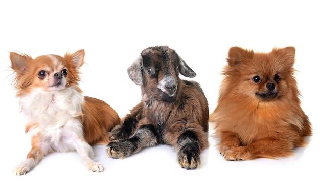 Bambino e cani