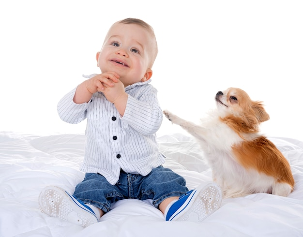 Bambino e chihuahua