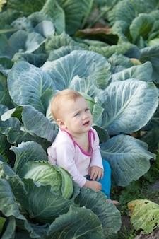 Bambino in pianta di cavolo