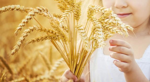 Bambino in un campo di grano. foto.