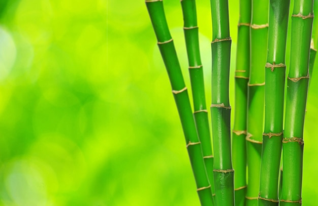 Bambù verde