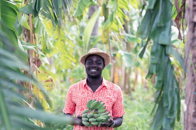 Banana africana della tenuta dell'agricoltore all'azienda agricola biologica
