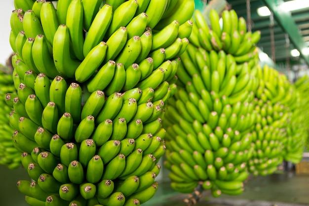 Banana delle canarie platano a la palma