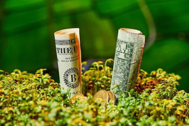 Banconota del dollaro americano su fondo verde naturale.