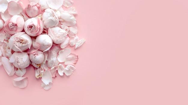 Banner con delicati rose rosa e petali si trovano su uno sfondo rosa chiaro, piatto laico, vista dall'alto