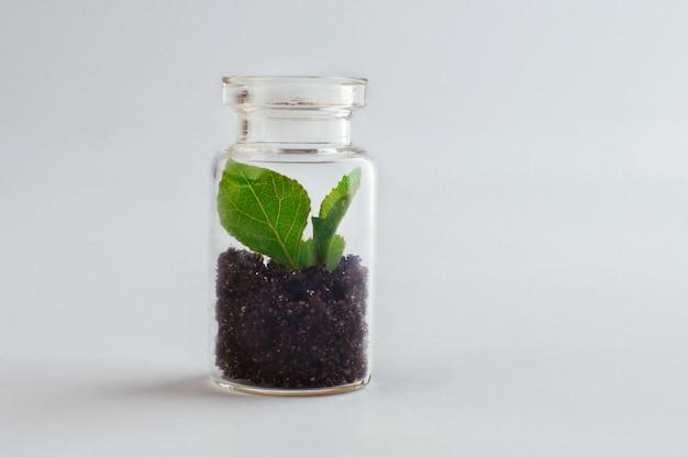Barattolo di vetro in miniatura con piantina che cresce al suo interno