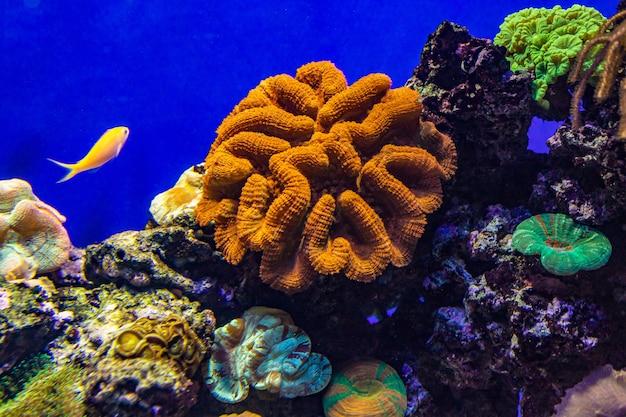 Barriera corallina colorata con pesci tropicali