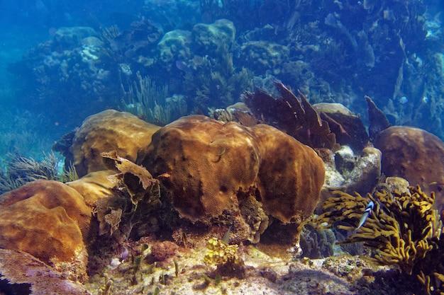 Barriera mesoamericana great mayan reef