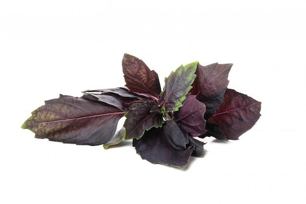 Basilico viola fresco isolato su priorità bassa bianca